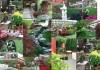 Podsumowanie 118 Wiosennej Wystawy Kwiatów i Ogrodów GardenExpo