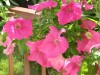 Rośliny doniczkowe na balkonach i tarasach – skutki wyjałowienia gleby
